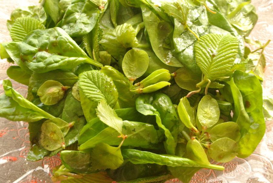 Grønn vårsalat med appelsinvinaigrette